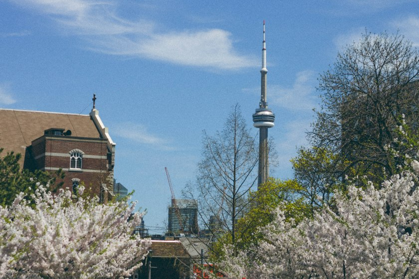CN Tower, Cherry Blossoms, Park, Trinity Bellwoods, Toronto.