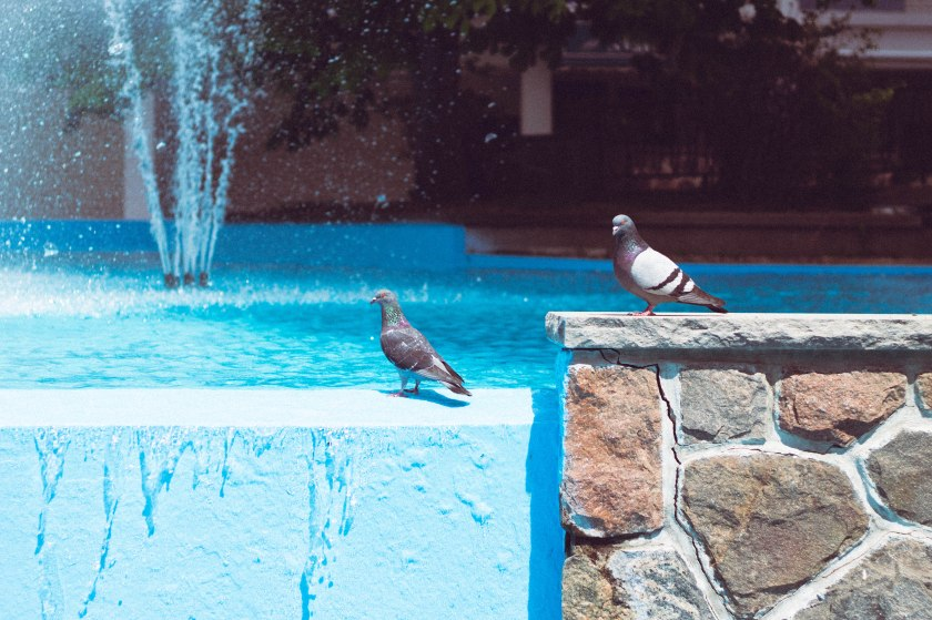 birds, fountain, pigeons, blue, water, vivid, toronto