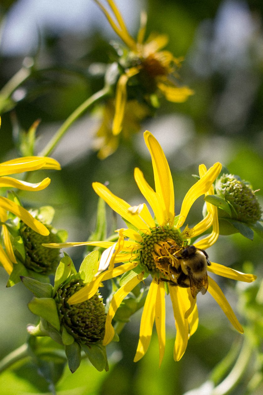 bee, nature, flower, yellow